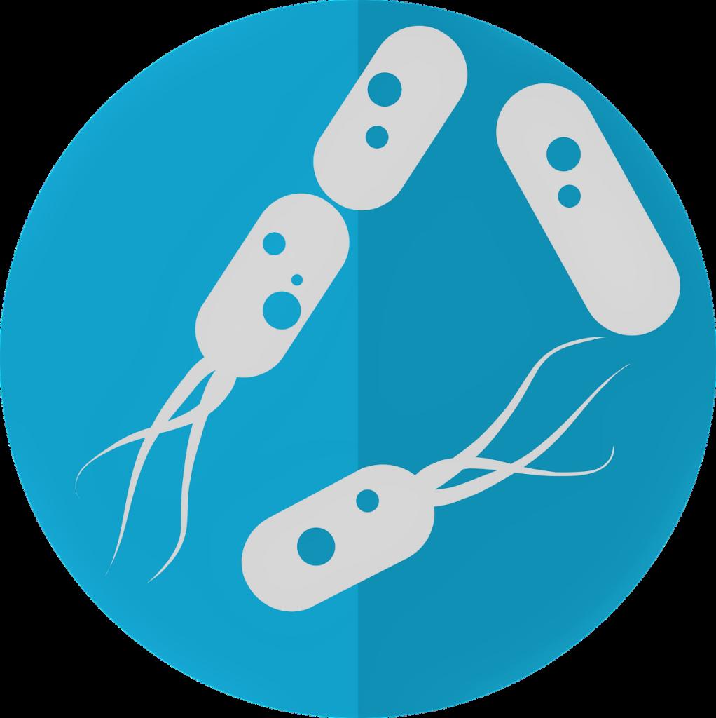 bacteria-intestinal-flora